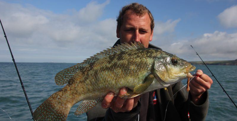 Wrasse ballan go angling for Fishing videos 2016