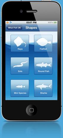 whatfish-logo-2